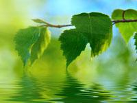depollution des eaux